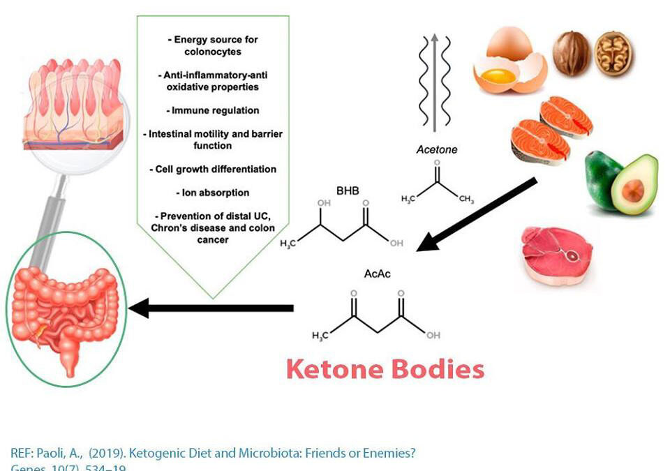 Ketogenic diet and gut microbiome
