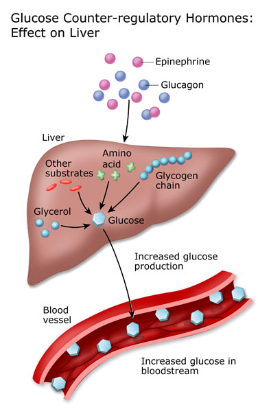 hepatic glucose output